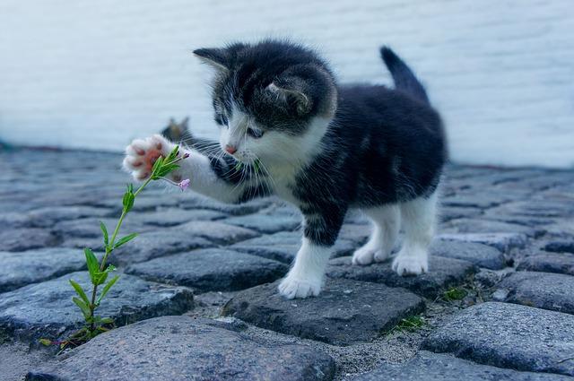 ペット、猫