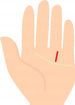薬指の下から感情線まで1本ある